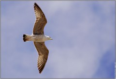 galerie-membre,maroc-casablanca,vol-d-oiseau.jpg